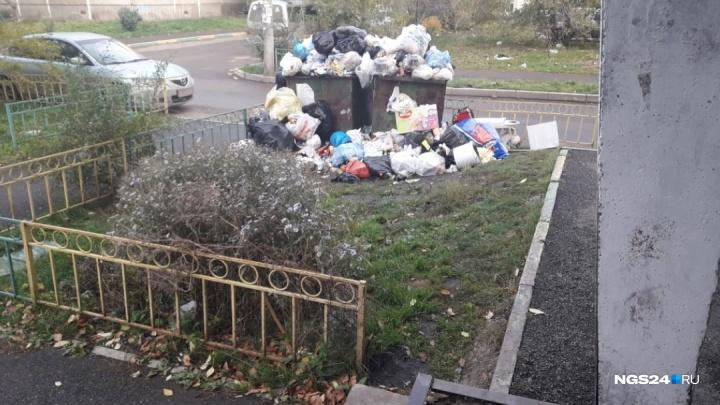 Жители Красноярска массово жалуются на УК«Новый вектор»: коммунальщики неделями не вывозят мусор