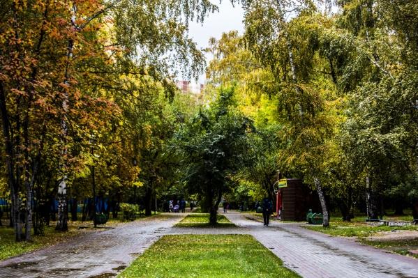 В Новосибирске уже пожелтели тополя, берёзы и клёны