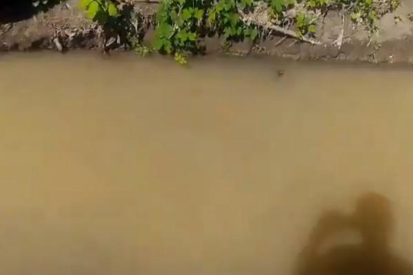 Вода в Орловке меняет цвет почти каждый день