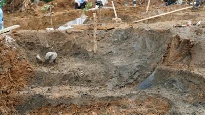 «Эти гиганты ходили по пермской земле»: ученыенашли крупные части скелета трогонтериевого слона