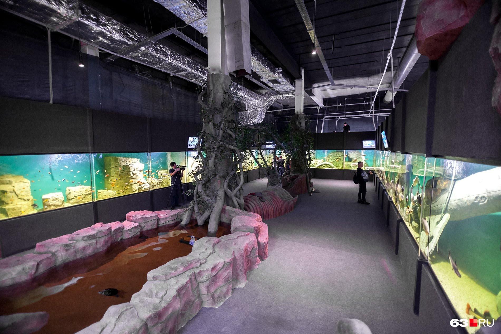 Панорамный аквариум поделили на несколько зон