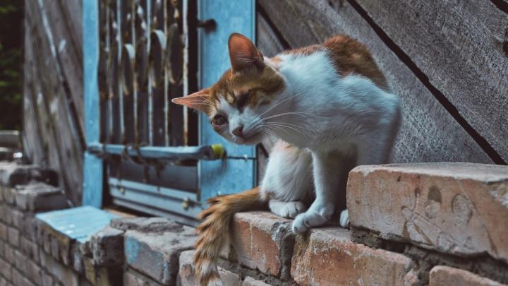 «Теперь всегда ношу с собой еду»: любуемся кошачьим очарованием в объективе волгоградского фотографа