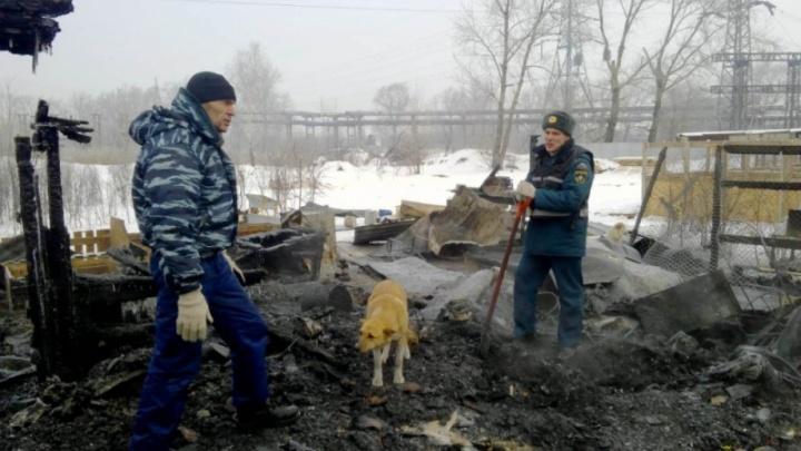 «Основная версия — поджог»: в Челябинске сгорел приют для животных