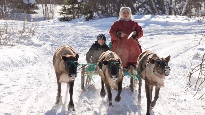 Олени, Индия, Масленица и «Обед для грешников»: как провести весенние праздники в Архангельске