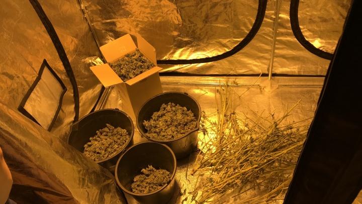 Жителю Чусового грозит 10 лет колонии за выращивание конопли в теплицах