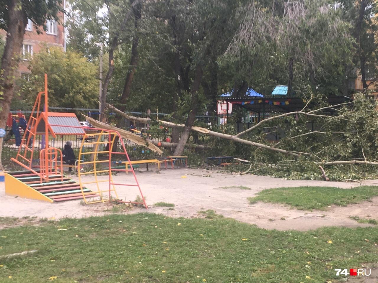 В детском саду в Металлургическом районе упало дерево