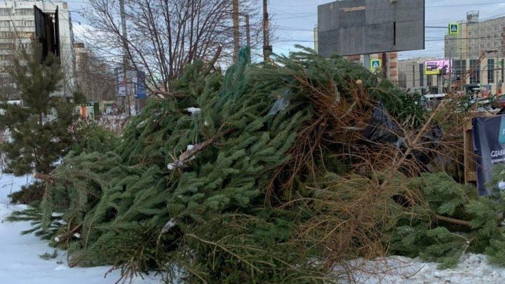 «На твёрдую четвёрку»: в Челябинске посчитали, сколько ёлок собрали после новогодних праздников
