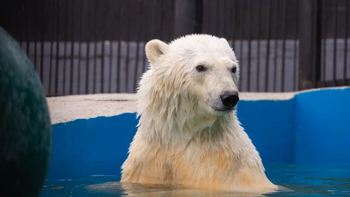 «Нора или Норильчанка»: стартовал сбор предложений на имя спасённой медведицы