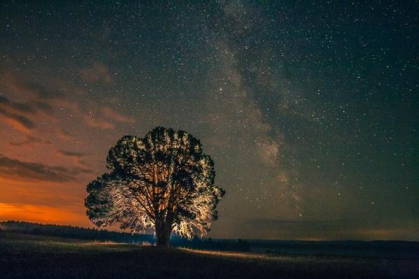 Звездное небо и трехсотлетняя сосна. Фото было сделано в Удмуртии, в селе Большой Кияик. Автор:Сергей Ульихин