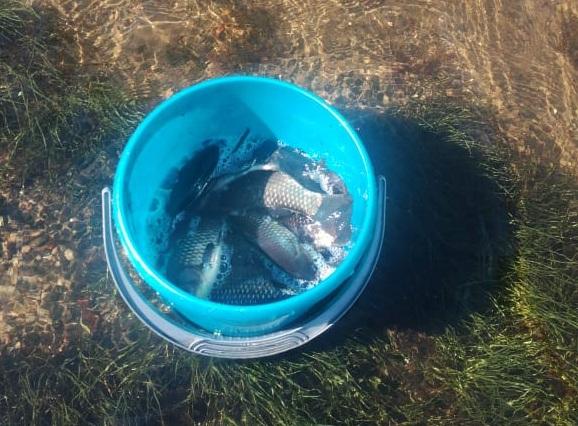 Дачникам из СНТ «Ёлочка» далеко за рыбой ходить не надо — её можно ловить прямо на затопленных садовых участках