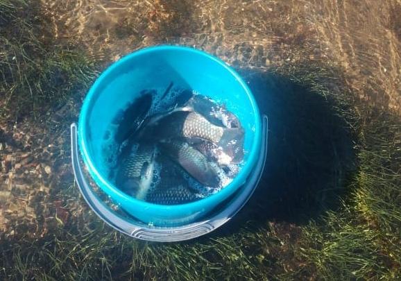 Ловим рыбу в огороде: под Новосибирском затопило сотни дач