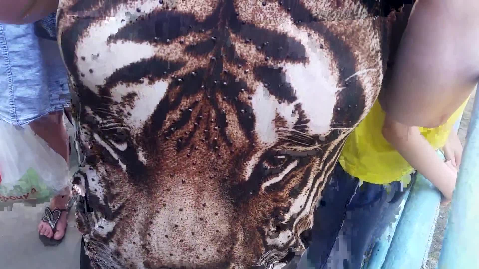 Изображение, которое привлекло внимание тигра