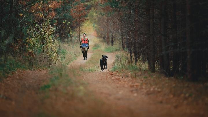 Нижегородский журналист «потерялся» в лесу, и его искали с собаками