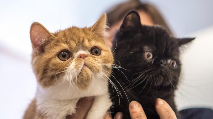 Возьмите нас с собой: новосибирцы выстроились в очередь за грустными котиками