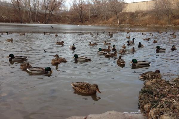 Птицы облюбовали спасенное озеро