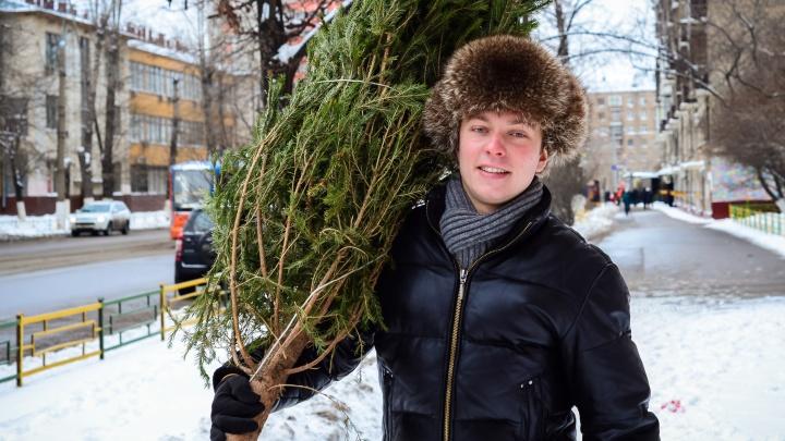 Ёлочка, зажгись: как правильно выбрать новогоднее дерево для дома