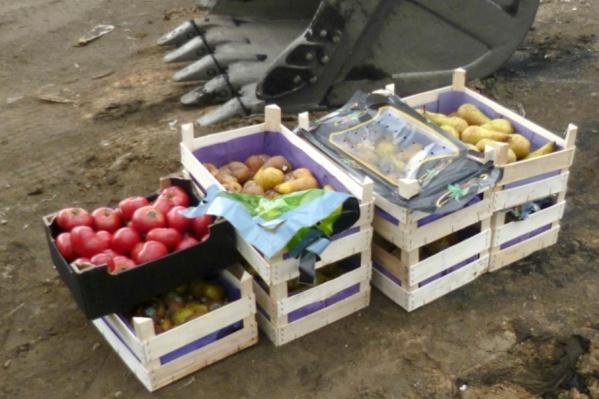 Овощи и фрукты уничтожили на полигоне