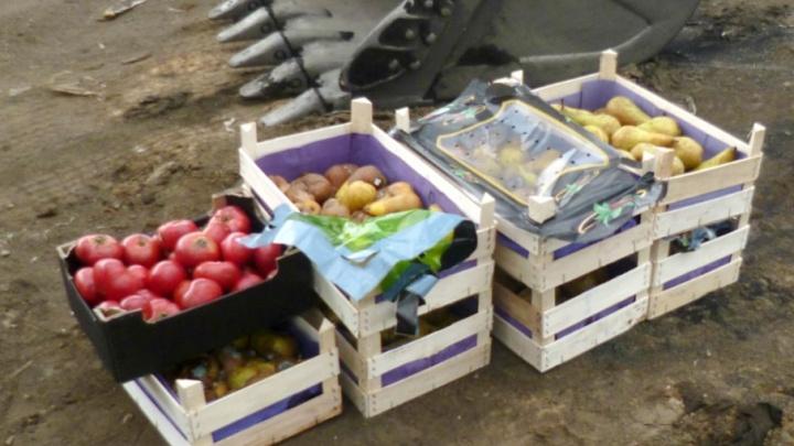 У предпринимателя отобрали 85 килограммов томатов и груш и раскатали их на «Скоково»