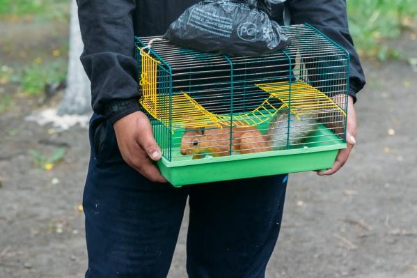 В сквере белочкам докучали другие грызуны. В зоопарке будут следить, чтобы рыжих пушистиков никто не обижал