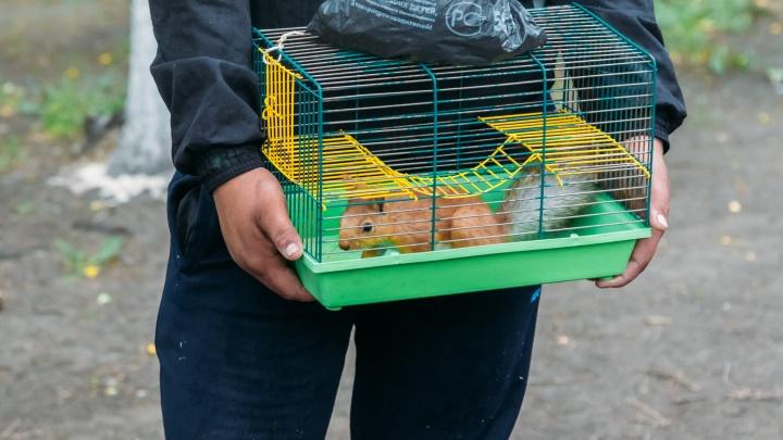 Белок выселили из сквера Немцова: клетку разобрали, животных отправили в зоопарк