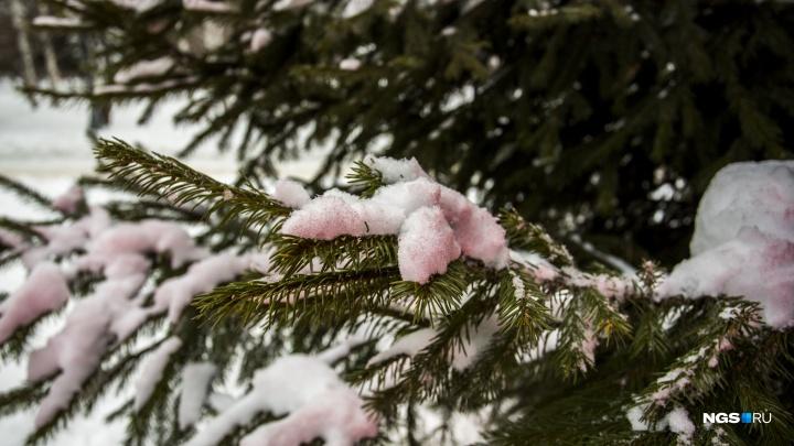 В Первомайском сквере появился розовый снег. Рассказываем, почему его покрасили