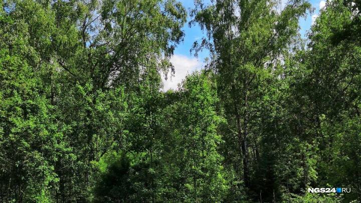 Муж и жена ушли в лес и пропали. Что делать, если заблудился?