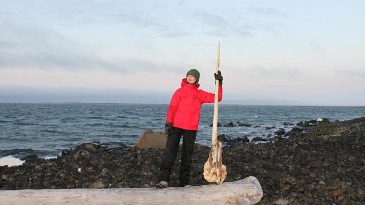 Рог в человеческий рост: на Земле Франца-Иосифа нашли череп арктического морского единорога