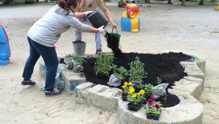 Инструкция E1.RU: с кем договариваться, чтобы посадить ромашки и сирень во дворе дома