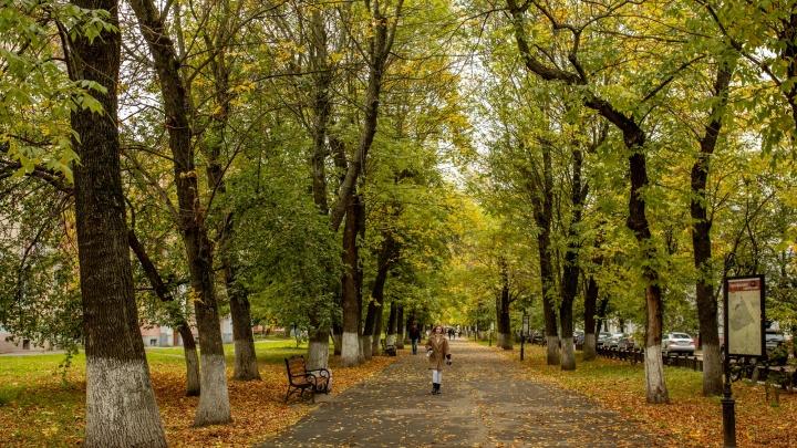 Тепло ещё вернётся: как в центре России будет меняться погода до устойчивого снежного покрова