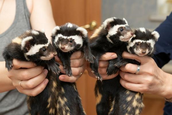 Перевязки размножаются только в Новосибирском зоопарке