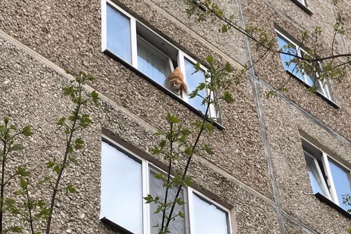 Кошка, застрявшая в открытом окне