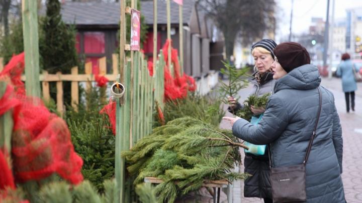 Пенсионерам веточки бесплатно: сколько стоят живые ёлки в Ярославле