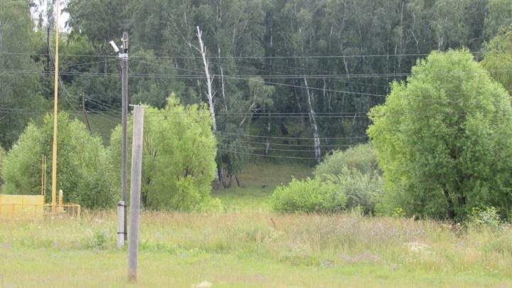 Несколько взмахов топора, и три поселка Кетовского района остались без света