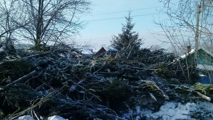 Фотофакт: на Бердское шоссе вывалили триста новогодних пихт