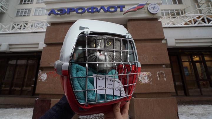 Пермский кот Барсик поддержал права толстых котов летать на самолетах