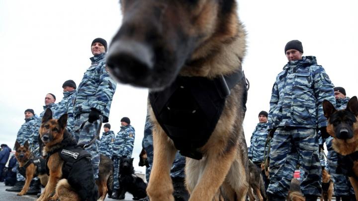 13,6 миллиона рублей потратят на корм для служебных собак в Башкирии