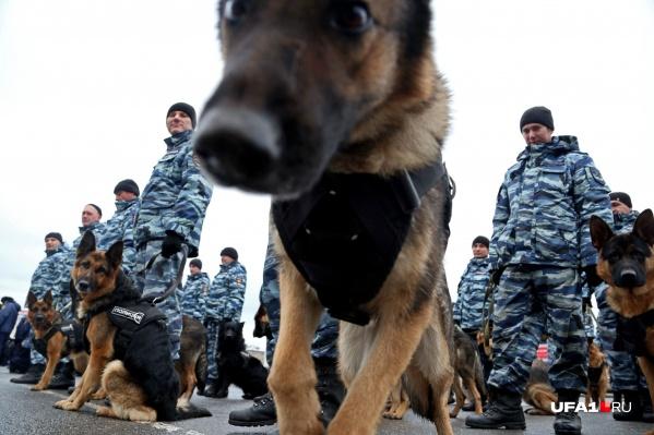 За рационом собак государство следит очень пристально