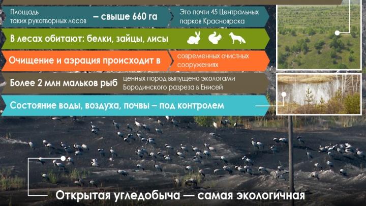 Повод для гордости: Бородинский разрез облюбовала стая краснокнижных журавлей