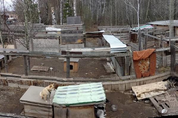 Так выглядит вольер для собак в приюте Академгородка сейчас