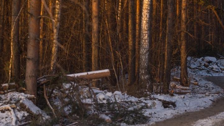 В лесу под Екатеринбургом полицейские нашли «клад» наркодилеров с гашишем и «синтетикой»