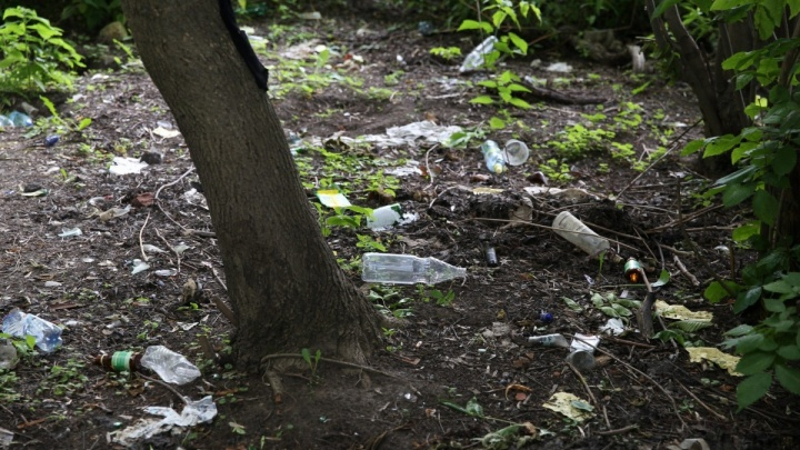 Стучи на людей — береги природу. Ярославцев призвали сдавать тех, кто мусорит в лесу
