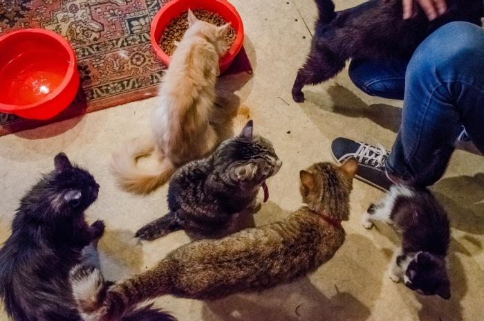 Пожилые жильцы держат дома больше 20 кошек