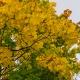 В Прикамье ожидаются теплые и дождливые выходные