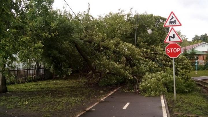 В одном из парков на прогулочную тропинку упало дерево
