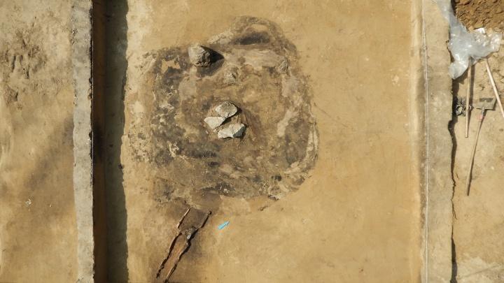 Археологи показали древнего новосибирца, найденного на берегу Оби