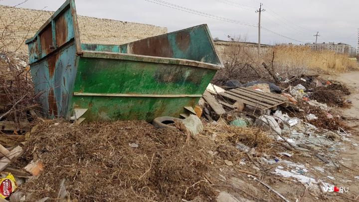 «Приходится убираться самим»: волгоградцы с заваленными мусорками ждут нашествия грызунов