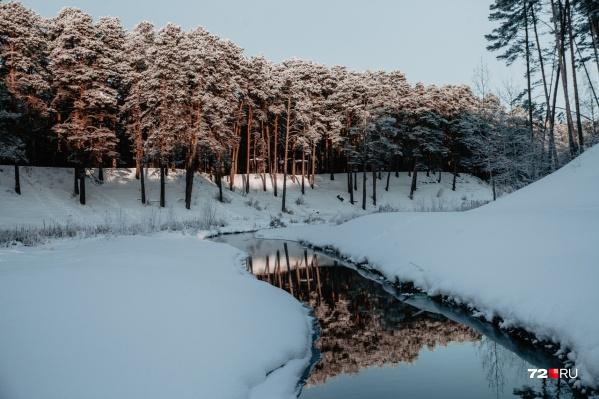 Зима в нашей области началась с аномального тепла в декабре. По данным синоптиков, январь станет самым холодным месяцем из трех, но тем не менее сильных и продолжительных морозов в области не ожидается