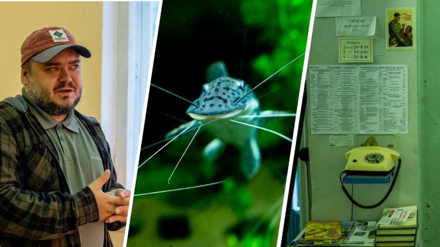 Кто завёз в Волгу медуз и креветок: под Ярославлем учёные открывают подводные тайны планеты
