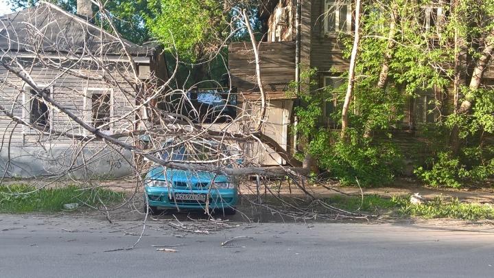 В Самаре сухое дерево упало на автомобиль