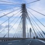 Выкупят участки — вырубят лес: для моста у Климовки изъяли более 10 миллионов кв. метров земли